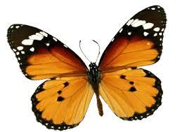 Massimo Meneghin basta con le farfalle